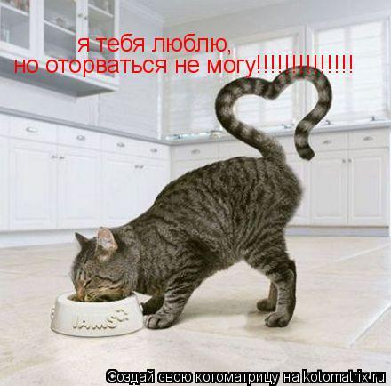 Котоматрица: я тебя люблю, но оторваться не могу!!!!!!!!!!!!!!