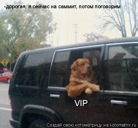 Котоматрица: VIP -дорогая, я сейчас на саммит, потом поговорим