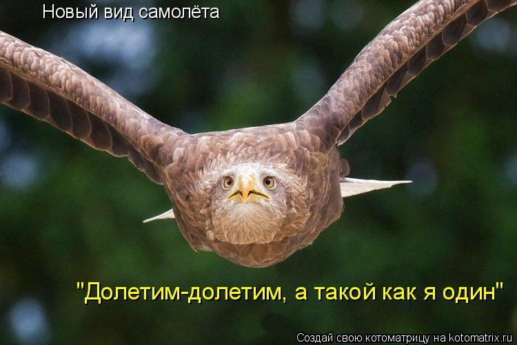 """Котоматрица: Новый вид самолёта """"Долетим-долетим, а такой как я один"""""""