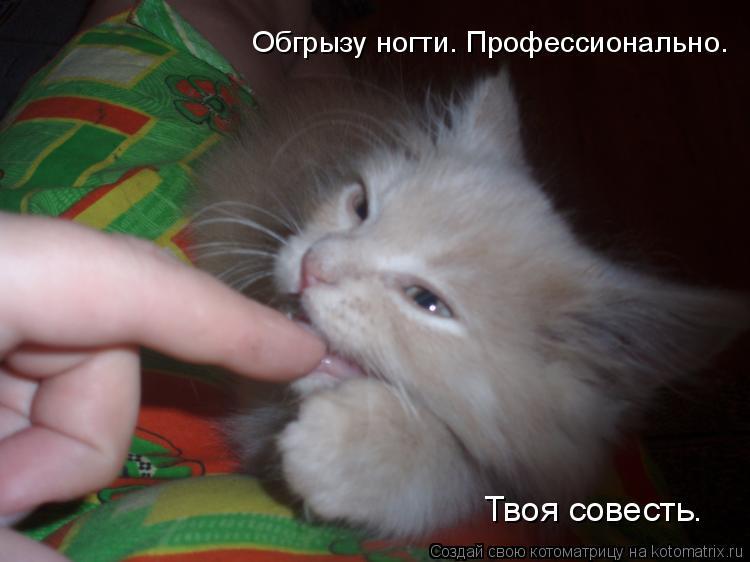 Котоматрица: Обгрызу ногти. Профессионально. Твоя совесть.