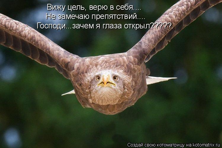 Котоматрица: Вижу цель, верю в себя.... Не замечаю препятствий.... Господи...зачем я глаза открыл?????.