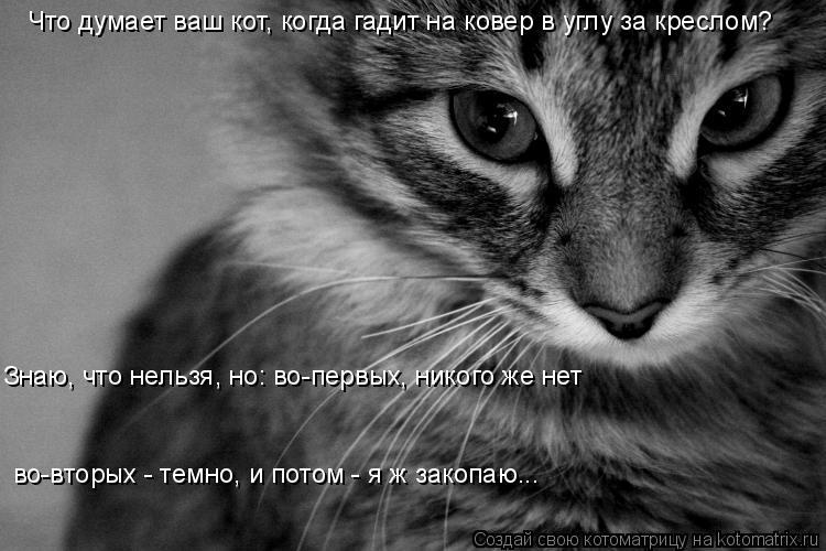 Котоматрица: Что думает ваш кот, когда гадит на ковер в углу за креслом?  Знаю, что нельзя, но: во-первых, никого же нет  во-вторых - темно, и потом - я ж закопа