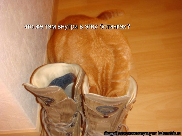 Котоматрица: что же там внутри в этих ботинках?