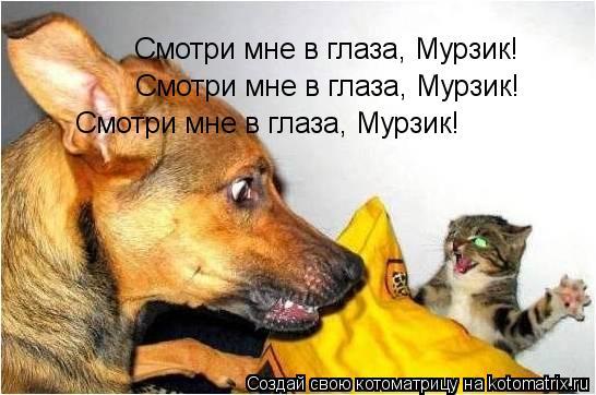 Котоматрица: Смотри мне в глаза, Мурзик! Смотри мне в глаза, Мурзик! Смотри мне в глаза, Мурзик!