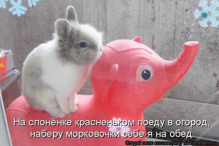 Котоматрица: На слонёнке красненьком поеду в огород, наберу морковочки себе я на обед.