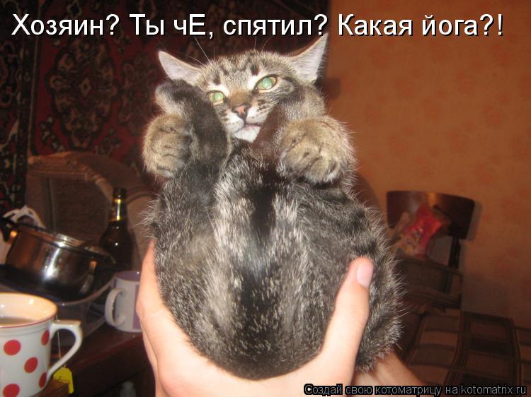 Котоматрица: Хозяин? Ты чЕ, спятил? Какая йога?!