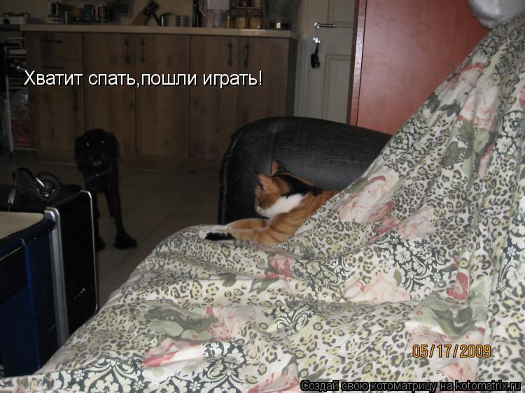 Котоматрица: Хватит спать,пошли играть!