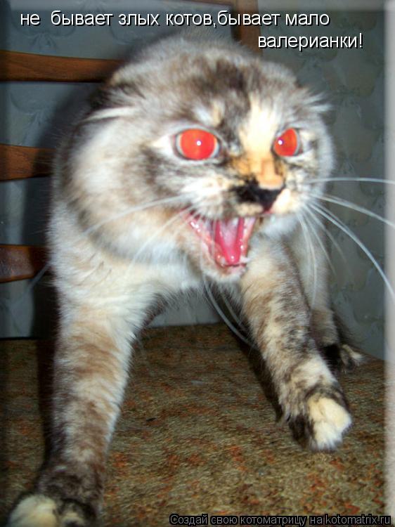 Котоматрица: не  бывает злых котов,бывает мало валерианки!