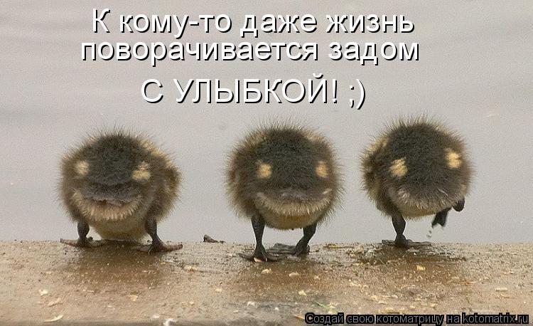 Котоматрица: К кому-то даже жизнь  поворачивается задом  С УЛЫБКОЙ! ;)