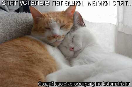 Котоматрица: спят усталые папашки, мамки спят...