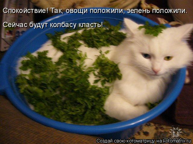 Котоматрица: Спокойствие! Так, овощи положили, зелень положили. Сейчас будут колбасу класть!
