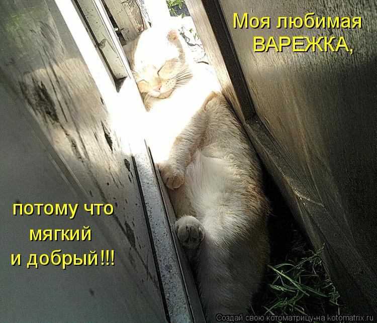 Котоматрица: Моя любимая  ВАРЕЖКА, потому что мягкий и добрый!!!