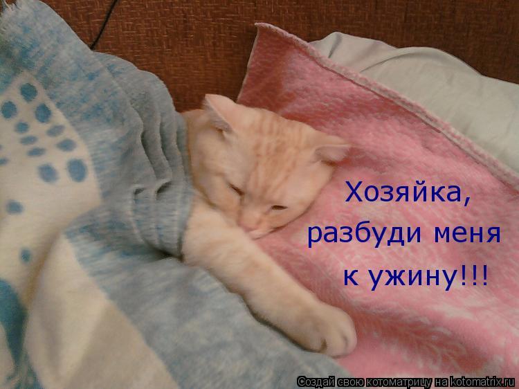 Котоматрица: Хозяйка, разбуди меня к ужину!!!