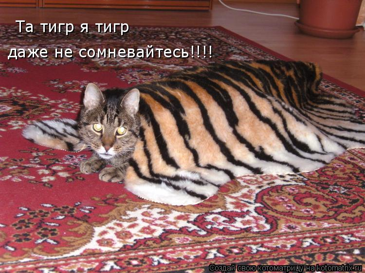 Котоматрица: Та тигр я тигр даже не сомневайтесь!!!!