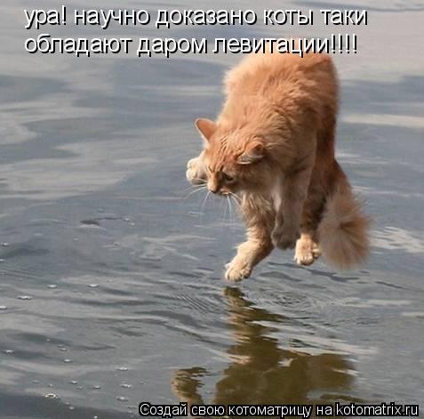 Котоматрица: ура! научно доказано коты таки  обладают даром левитации!!!!