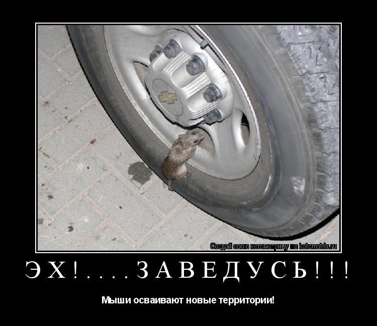 Котоматрица: эх!....заведусь!!! Мыши осваивают новые территории!