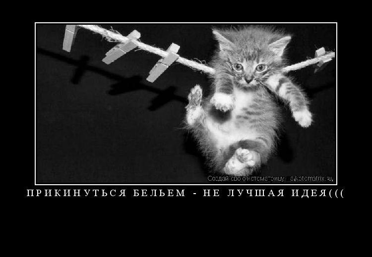 Котоматрица: ПРИКИНУТЬСЯ БЕЛЬЕМ - НЕ ЛУЧШАЯ ИДЕЯ(((