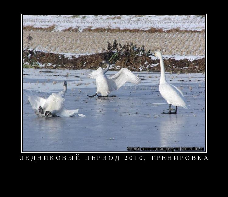Котоматрица: ЛЕДНИКОВЫЙ ПЕРИОД 2010, ТРЕНИРОВКА