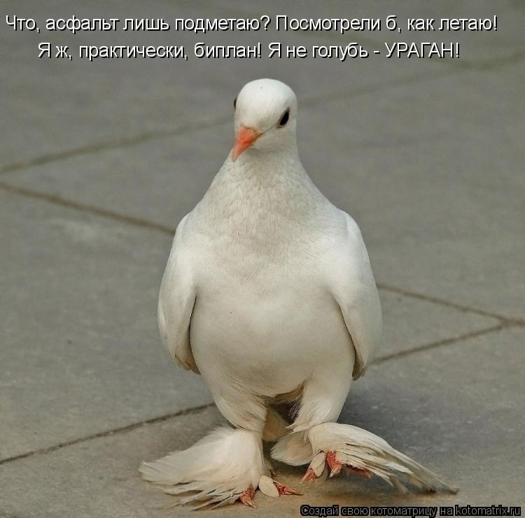 Котоматрица: Что, асфальт лишь подметаю? Посмотрели б, как летаю!  Я ж, практически, биплан! Я не голубь - УРАГАН!