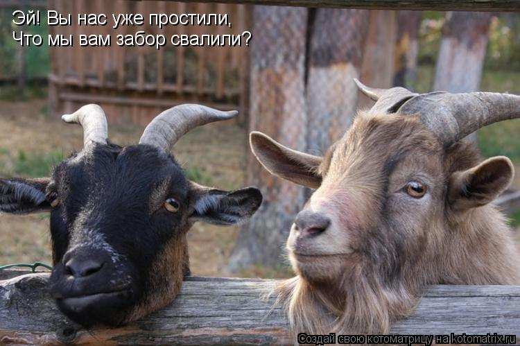 Котоматрица: Эй! Вы нас уже простили, Что мы вам забор свалили?