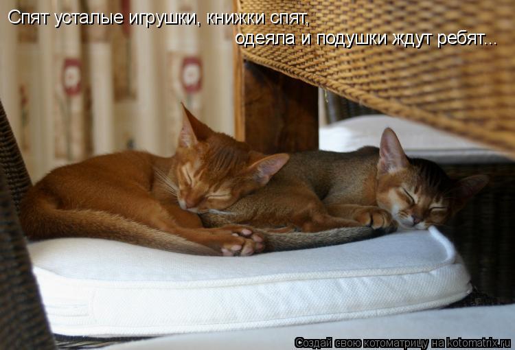 Котоматрица: Спят усталые игрушки, книжки спят,  одеяла и подушки ждут ребят... одеяла и подушки ждут ребят...