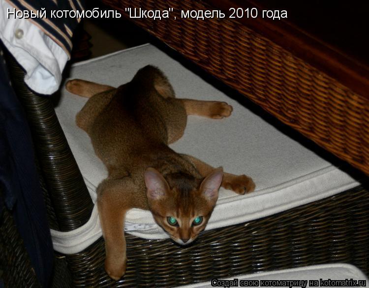 """Котоматрица: Новый котомобиль """"Шкода"""", модель 2010 года"""