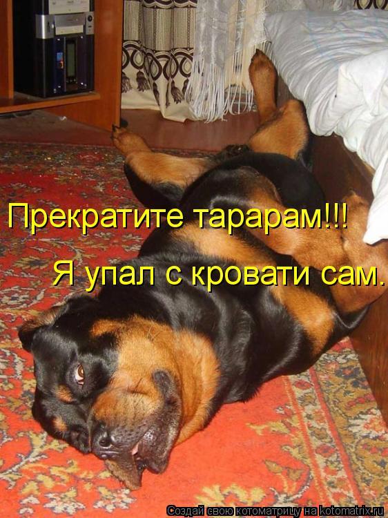Котоматрица: Прекратите тарарам!!! Я упал с кровати сам.