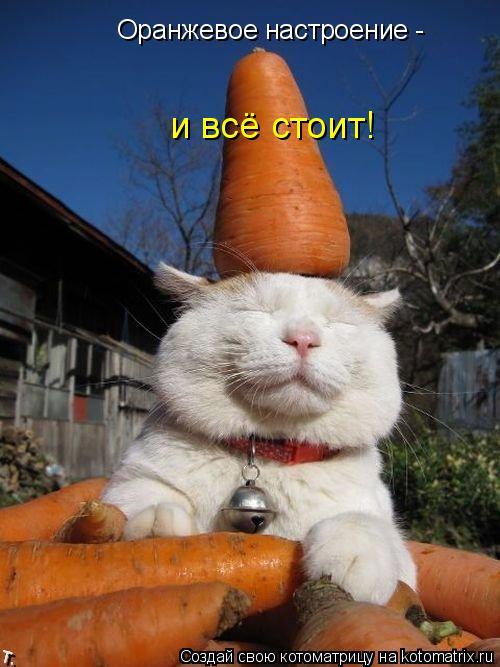 Котоматрица: Оранжевое настроение -  и всё стоит!