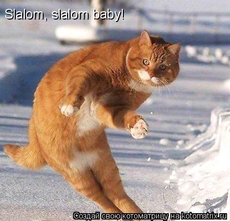 Котоматрица: Slalom, slalom baby!