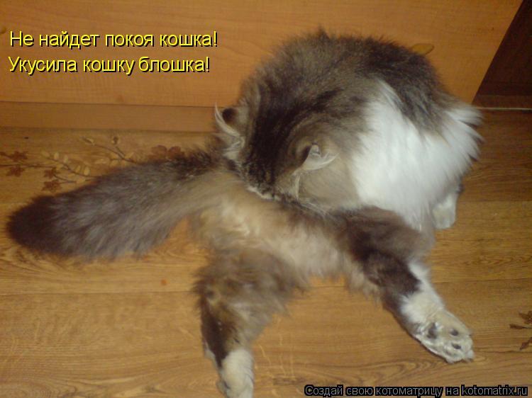 Котоматрица: Не найдет покоя кошка! Укусила кошку блошка!