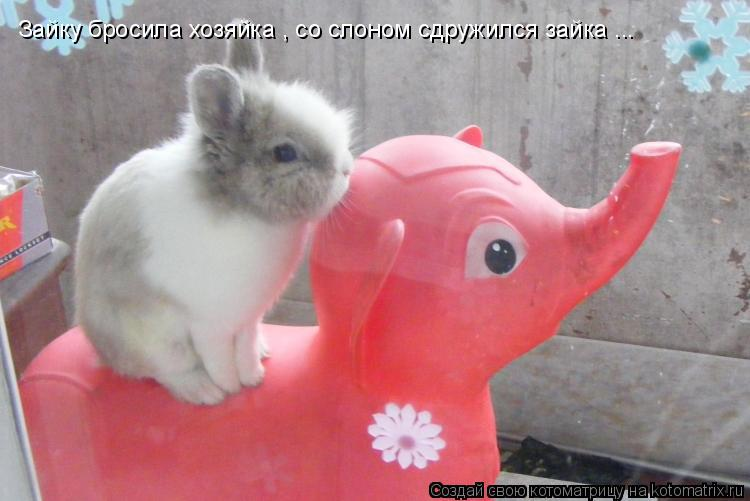 Котоматрица: Зайку бросила хозяйка , со слоном сдружился зайка ...