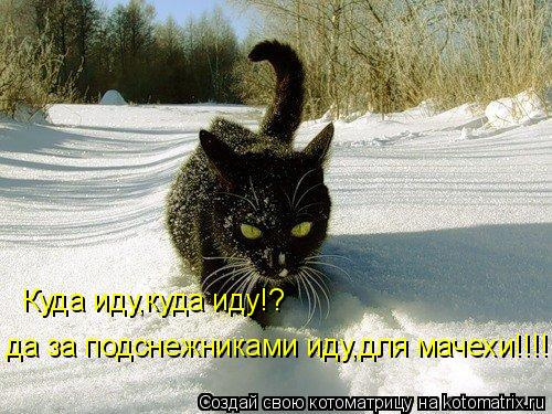 Котоматрица: Куда иду,куда иду!? да за подснежниками иду,для мачехи!!!!