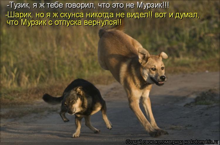 Котоматрица: -Тузик, я ж тебе говорил, что это не Мурзик!!!  -Шарик, но я ж скунса никогда не видел!! вот и думал, что Мурзик с отпуска вернулся!!