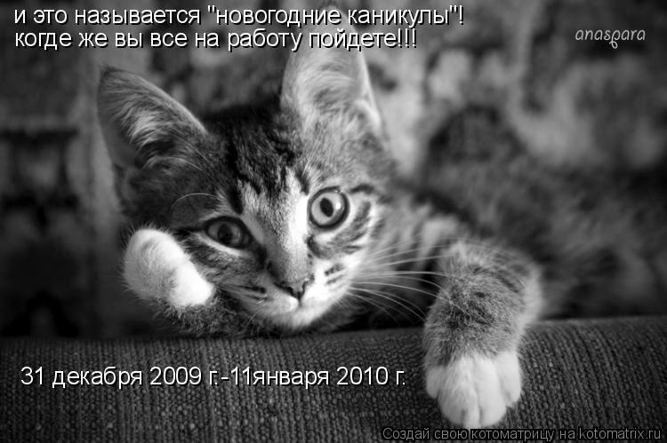 """Котоматрица: и это называется """"новогодние каникулы""""!  когде же вы все на работу пойдете!!! 31 декабря 2009 г.-11января 2010 г."""