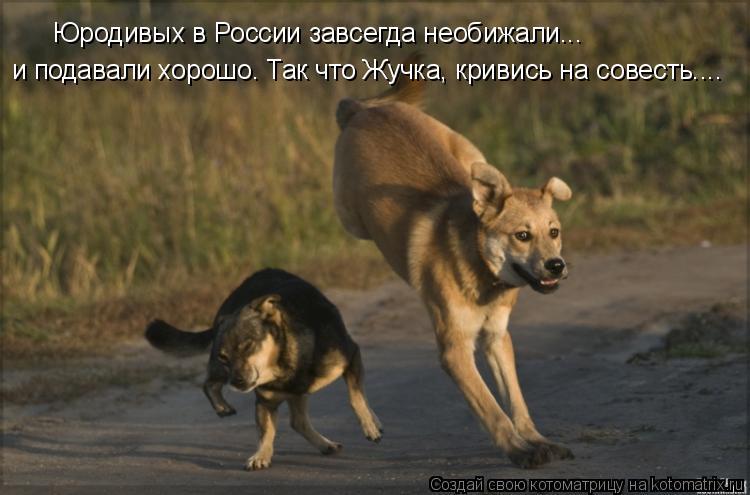 Котоматрица: Юродивых в России завсегда необижали...  и подавали хорошо. Так что Жучка, кривись на совесть....