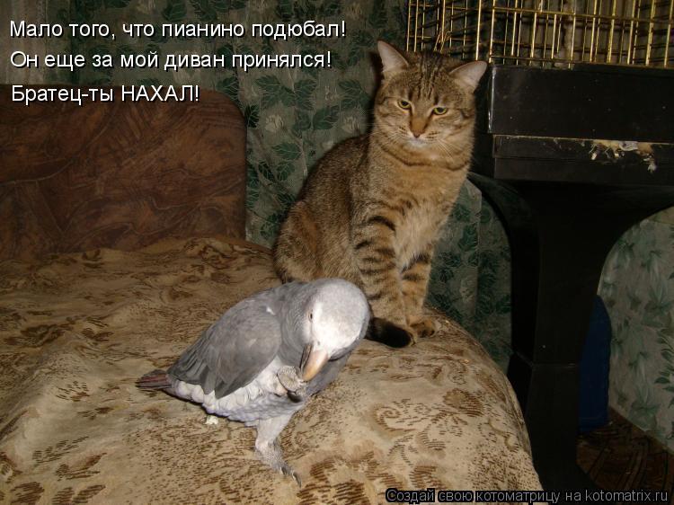 Котоматрица: Он еще за мой диван принялся! Мало того, что пианино подюбал! Братец-ты НАХАЛ!