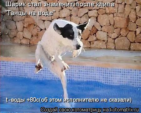"""Котоматрица: Шарик стал знаменит, после клипа """"Танцы на воде"""" t -воды +80c(об этом исполнителю не сказали)"""