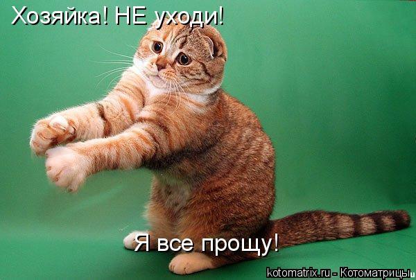 Котоматрица: Хозяйка! НЕ уходи! Я все прощу!