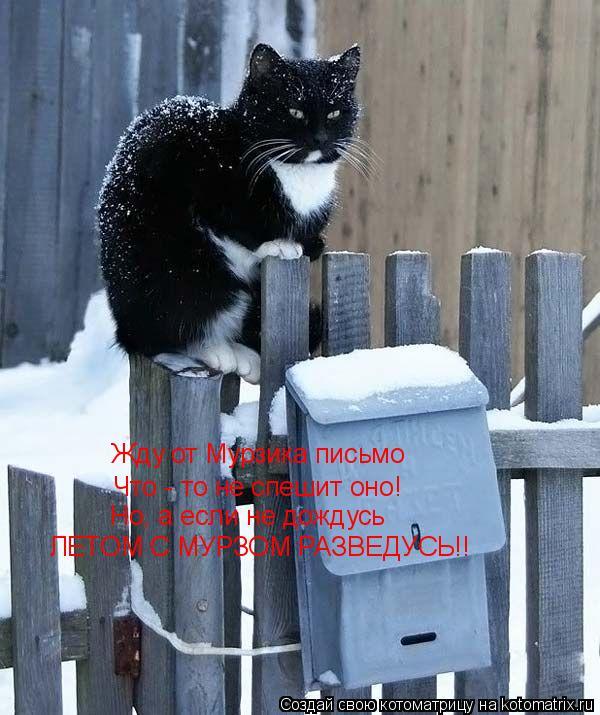 Котоматрица: Жду от Мурзика письмо  Что - то не спешит оно! Но, а если не дождусь ЛЕТОМ С МУРЗОМ РАЗВЕДУСЬ!!