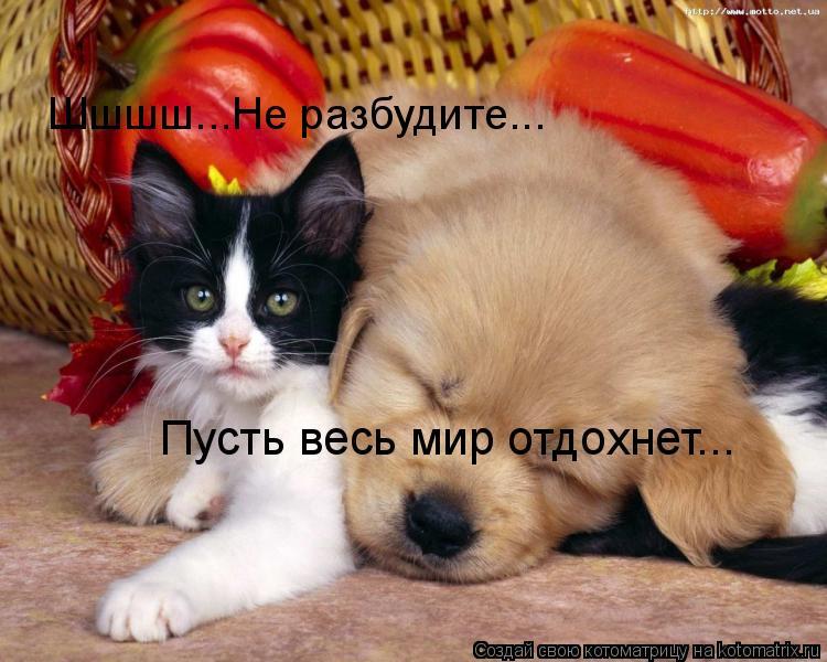 Котоматрица: Шшшш...Не разбудите... Пусть весь мир отдохнет...