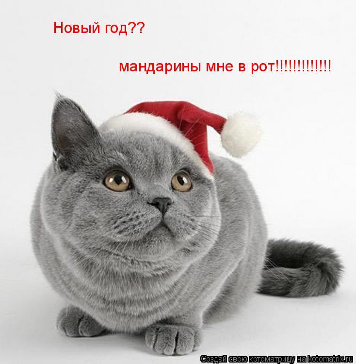 Котоматрица: Новый год?? мандарины мне в рот!!!!!!!!!!!!!