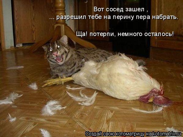 Котоматрица: Вот сосед зашел , ... разрешил тебе на перину пера набрать. Ща! потерпи, немного осталось!