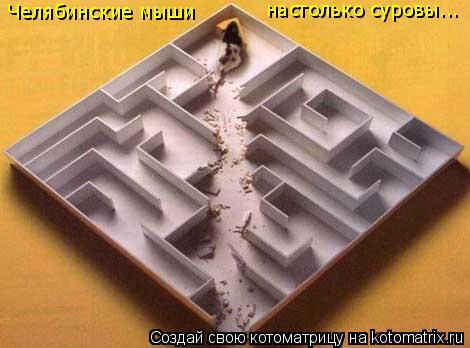 Котоматрица: Челябинские мыши настолько суровы...