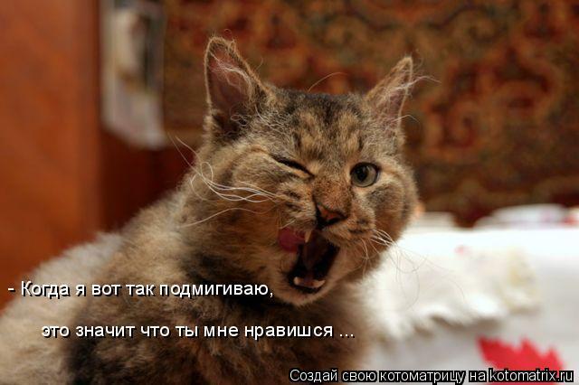 Котоматрица: - Когда я вот так подмигиваю,  это значит что ты мне нравишся ...
