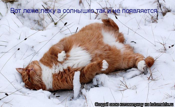 Котоматрица: Вот леже,лежу а солнышко так и не появляется...