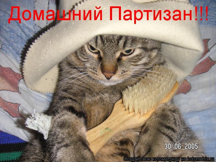 Котоматрица: Домашний Партизан!!!