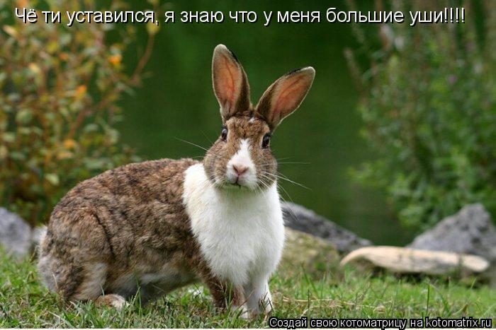 Котоматрица: Чё ти уставился, я знаю что у меня большие уши!!!!