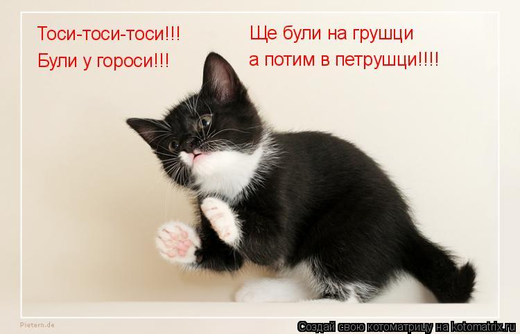Котоматрица: Тоси-тоси-тоси!!! Були у гороси!!! Ще були на грушци а потим в петрушци!!!!