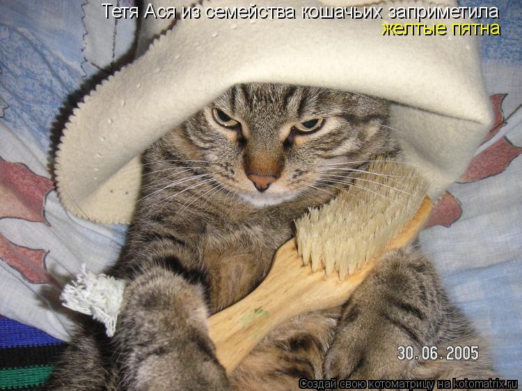 Котоматрица: Тетя Ася из семейства кошачьих заприметила желтые пятна