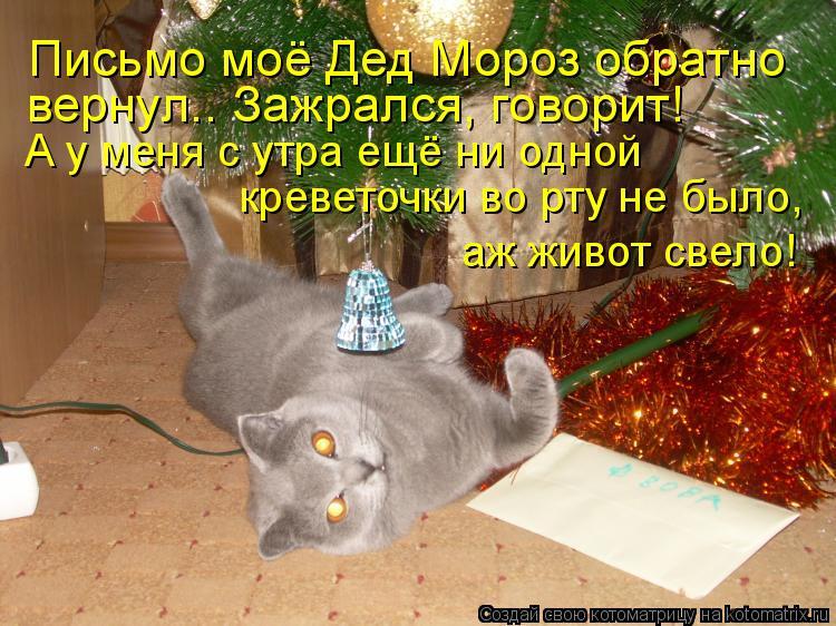 Котоматрица: Письмо моё Дед Мороз обратно вернул.. Зажрался, говорит! А у меня с утра ещё ни одной  креветочки во рту не было,  аж живот свело!